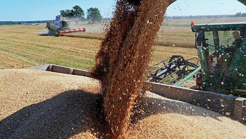 Шведские СМИ оценили успехи России в сельском хозяйстве