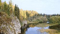 Барсук впервые появился в Печоро-Илычском заповеднике
