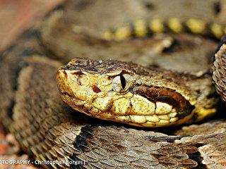 Змея. Архивное фото