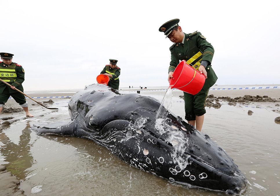 Сотрудники полиции поливают кита водой в провинции Цзидун, Китай