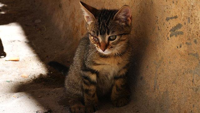 Котенок на улице. архивное фото