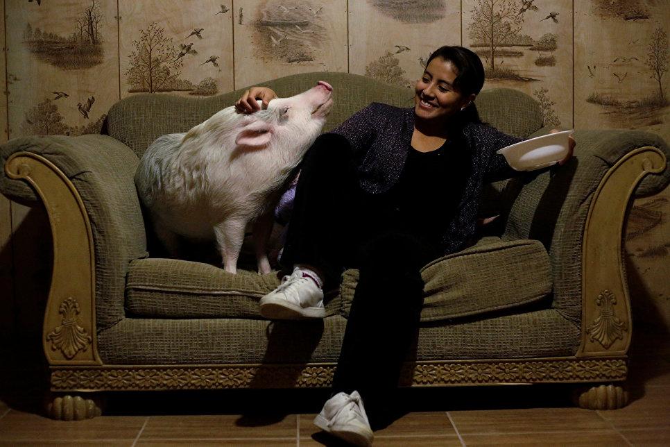 Yissel Mendoza со своей свиньей в доме в Мексике. 4 декабря 2017 год