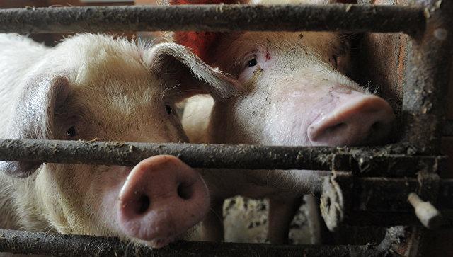 ВОмске вынесли вердикт  мужчине, который скормил фермера свиньям