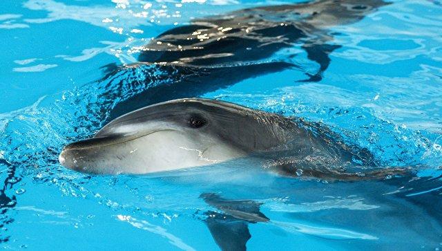 ВМехико под запрет попали представления сдельфинами итюленями
