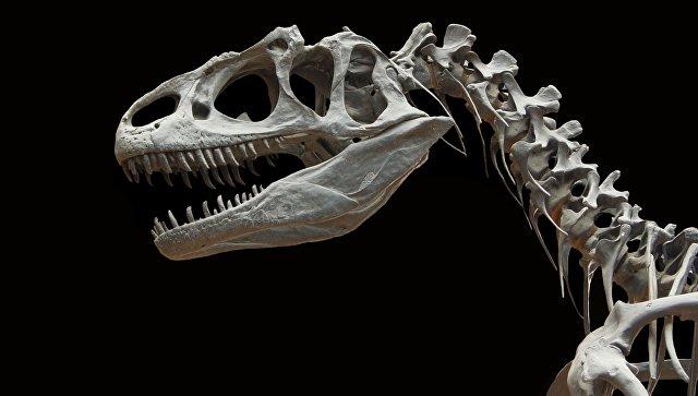 Китайский палеонтолог рассказал, как изучение динозавров помогает прогрессу
