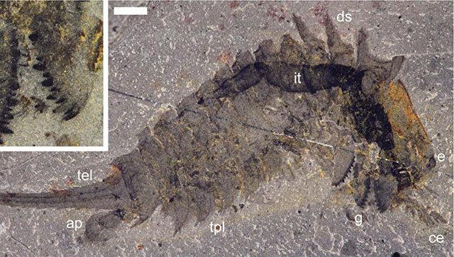 Останки «Чужого» отыскали насеверо-западе Канады