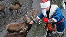 Сотрудник Калининградского зоопарка в костюме Деда Мороза кормит оленей. Архивное фото