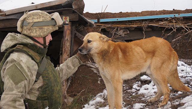 ЛНР: ВСУ сорвали «абсолютное перемирие»,— командование