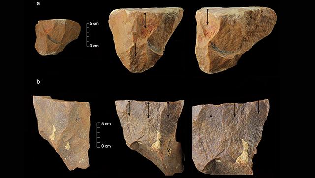 Находка археологов в Индии может переписать историю человечества