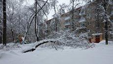 Дерево упавшее в одном из дворов из-за снегопада в Москве. 4 февраля 2018