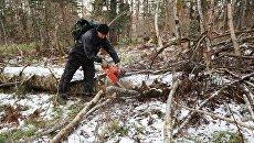 Расчистка леса от поваленных деревьев. Архивное фото