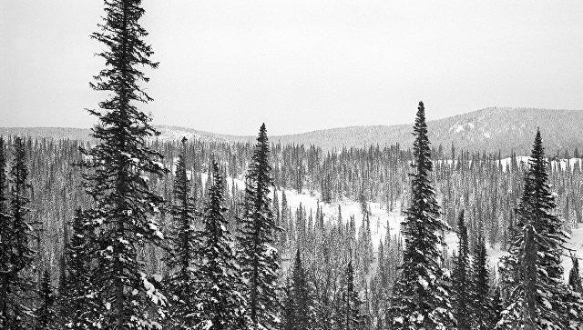 """В заповеднике """"Кузнецкий Алатау"""" прошли ежегодные зимние маршрутные учеты"""