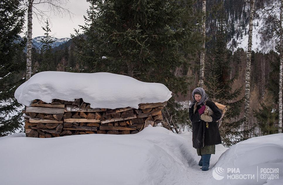 Агафья Лыкова идет с вязанкой дров по своей заимке.