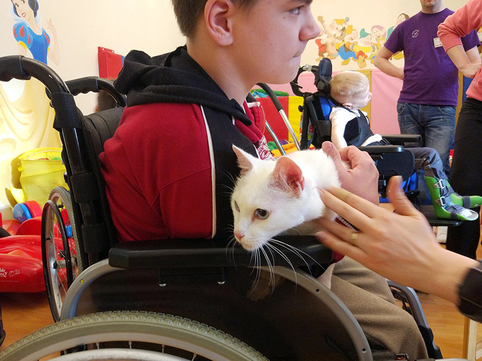 После завершения карьеры животные ищут новый дом. Иногда в этом помогает Детский хоспис, и коты переезжают к родителям подопечных