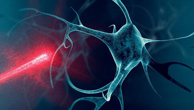 Нейриты растут в направлении источника тепла