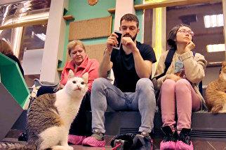 Волонтер и кошка сели у окошка: добровольцы рассказали о Республике кошек