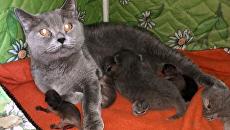 В Приморье кошка позаботилась о новорожденных енотах, которых выкинула мать