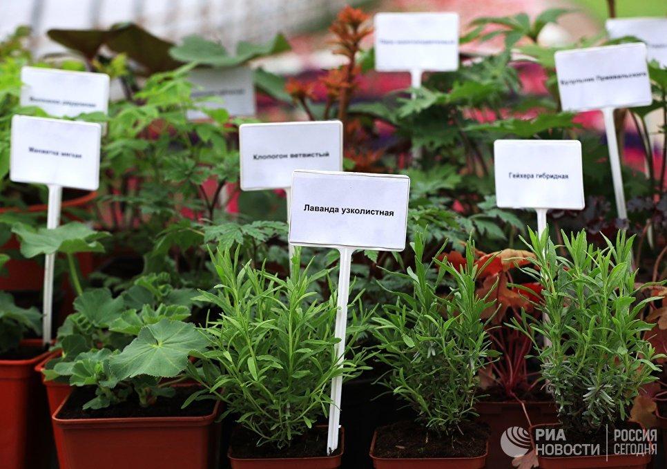 Выращивание цветов для городских клумб