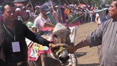 Гонки на ослах и конкурс костюмов - как прошел ослиный фестиваль в Мексике