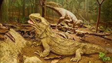 Гаттерия – древняя ящерица, сохранившаяся со времен динозавров и обитающая на островах Новой Зеландии