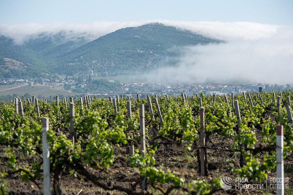 Виноградники в Балаклаве