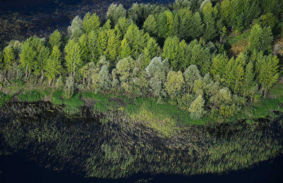 Минприроды РФ планирует наращивать темпы лесовосстановления