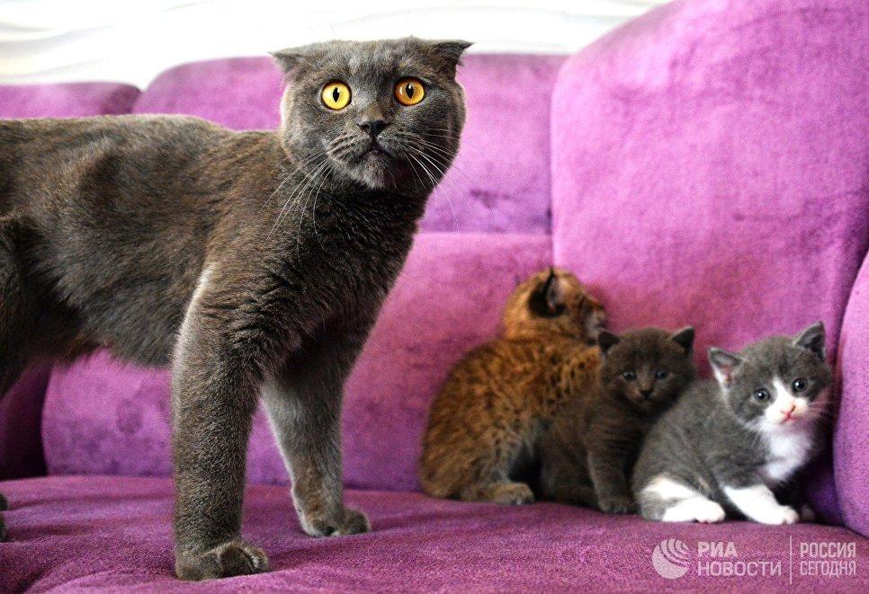 Кошка по кличке Моника со своими котятами и рысенком, которого она выкормила в зоопарке Чудесный недалеко от Уссурийска в Приморском крае. Теперь она воспитывает его, поскольку биологическая мама не может ухаживать за детенышем из‐за проблем со здоровьем