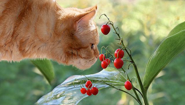 Кошка нюхает ландыш