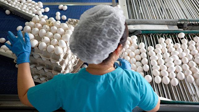 Сотрудница на линии сортировки яиц на птицефабрике. Архивное фото
