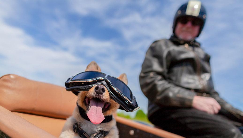 Собака в коляске мотоцикла. Архивное фото