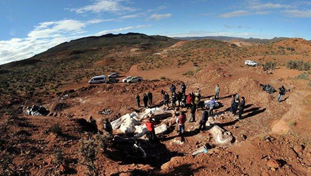 Археологи на месте раскопок, где были найдены кости гигантского динозавра