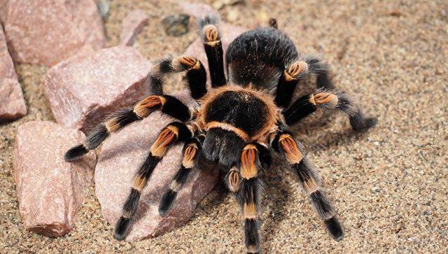 Эксперт рассказал, как теплые зимы влияют на миграцию ядовитых пауков