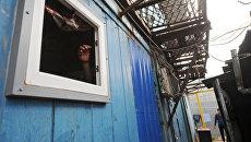 Иностранные рабочие в Московской области