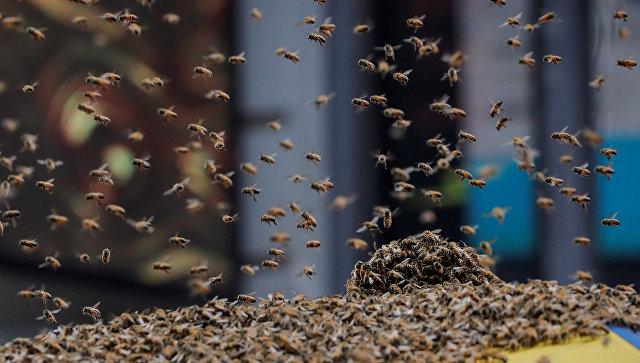 Пчелы атаковали палатку с хот-догами в центре Манхэттена