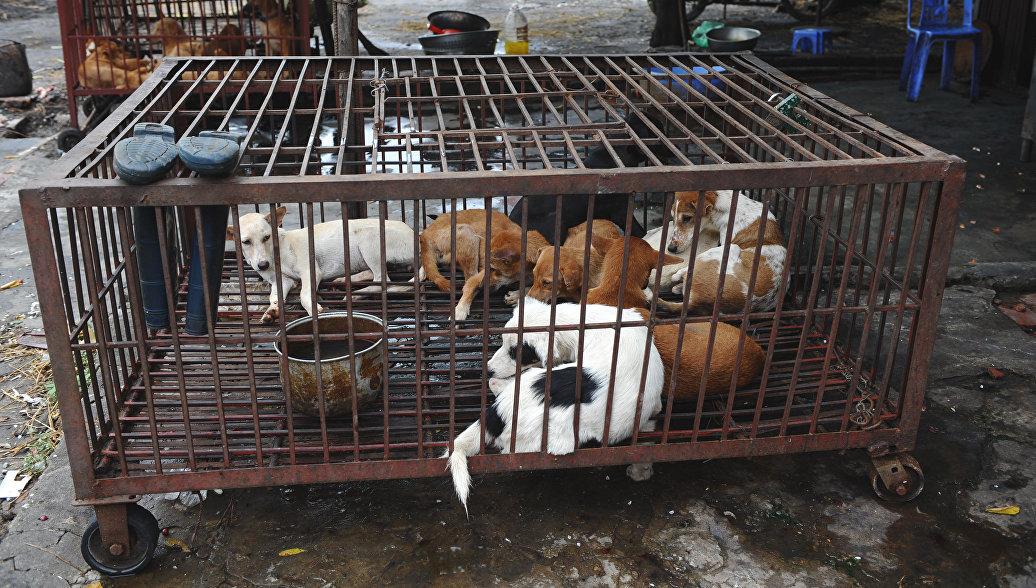 Собаки в клетке в Ханое, Вьетнам