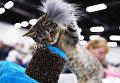 Зрители выставки Звезда 2018 могли не только полюбоваться кошками, но и приобрести котят