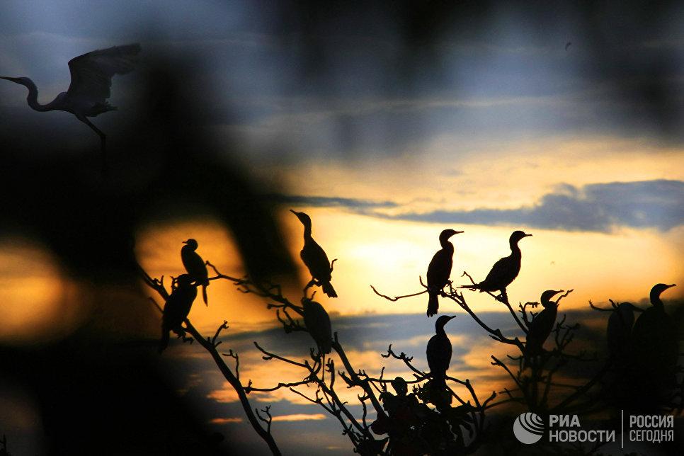 Балийский парк птиц.