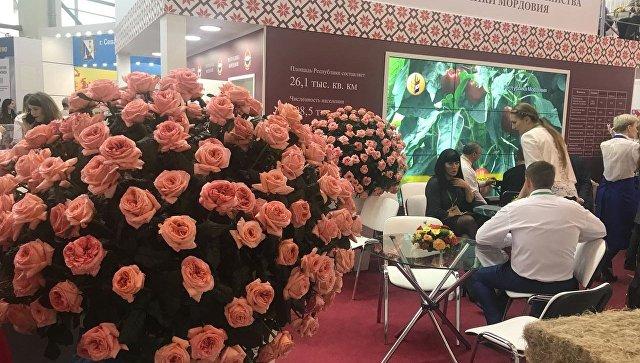 Павильон Мордовии на российской агропромышленной выставке Золотая осень в Москве