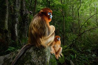 Работа фотографа Marsel van Oosten. Победители конкурса Wildlife Photographer of the Year 2018