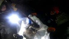 В Челябинске спасли енотовидную собаку и выпустили ее в лес