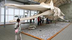 РГО поможет развивать науку об океане в Калининградской области