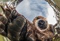 Любопытный медведь. Коростелев Михаил/Россия