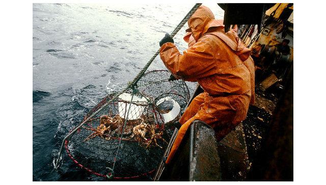 Приморские рыбаки просят Путина не возвращать прежнюю систему крабовых квот