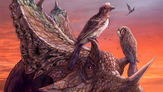 Птицы могли научиться летать дважды, заявляют палеонтологи