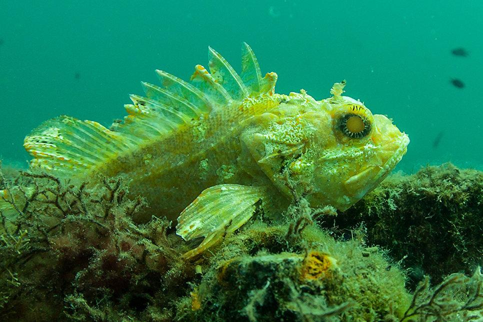 Ученые нашли способ улучшить качество подводной фотосъемки