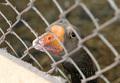 В Южной Корее новая вспышка птичьего гриппа