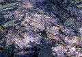 Фотография участка поверхности Марса с высоким содержанием карбонатов в районе кратера Гюйгенс