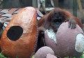 Животные зоопарка Буэнос-Айреса получили к Пасхе гигантские яйца