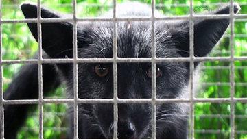 Новосибирские ученые раскрыли тайну одомашнивания животных