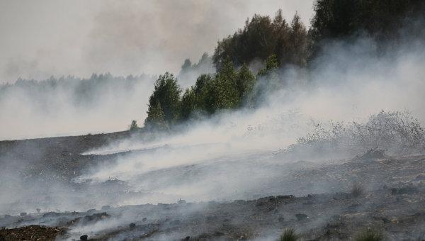 пожары торфяные фото